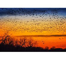 Swarm Setting – Sandhills over The Platte Photographic Print