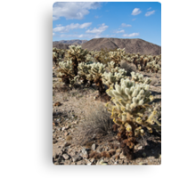 Jumping Cholla Cactus Field Canvas Print