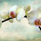 Orchid Heaven by Jessica Jenney