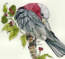 GALAH PARROT by CRYROLFE