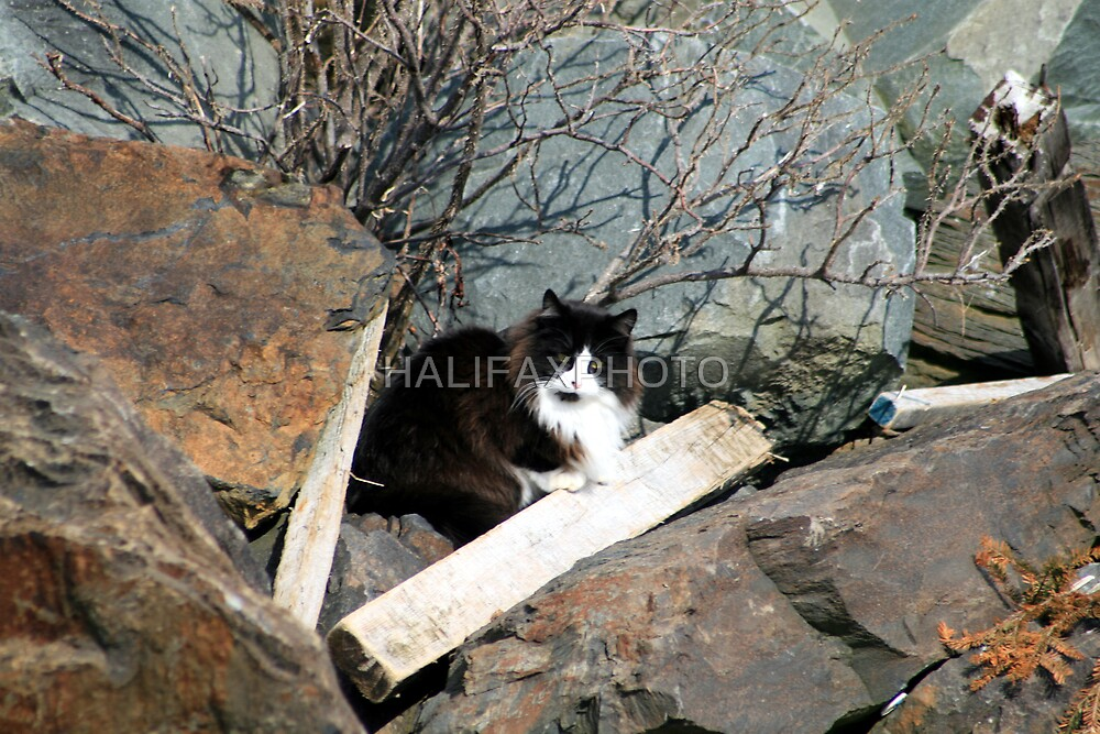 Stray Cat by HALIFAXPHOTO