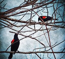 Nature's Birdcage by SRowe Art