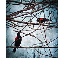 Nature's Birdcage Photographic Print