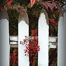 Weatherworn Pickets by Gayle Dolinger