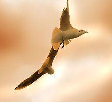 Birds in flight by Mike Butchart
