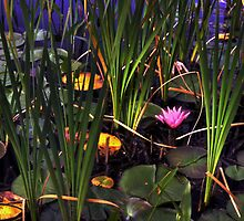 Shadows over Water Lillies by Wayne King