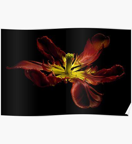 The dancing tulip Poster