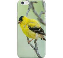 Mr. Goldfinch iPhone Case/Skin