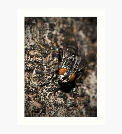 Bug eyed Art Print