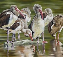 Fledgling Ibis Study by Phyllis Beiser