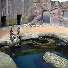 Penguin Enclosure at Gweek Cornwall UK by lynn carter