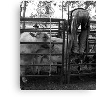 Cowboys 4 Canvas Print