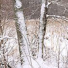 Snow on Trees by John Wright
