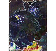 Black Blossoms Photographic Print