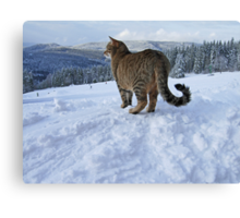 where are you  my kitten? Canvas Print
