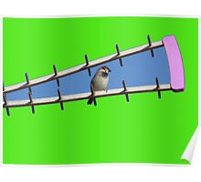 Sparrow on blue and green background Poster