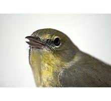 Mr. Finch Photographic Print