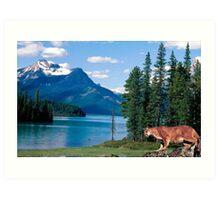 1151-Northwestern Cougar Art Print