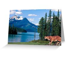 1151-Northwestern Cougar Greeting Card