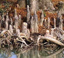 Cypress Knees by Samantha Dean