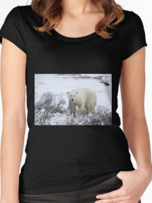 Polar Bear in the Arctic Willow Women's Fitted Scoop T-Shirt