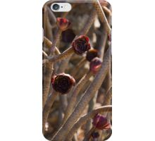 Alien Plantlife - Peculiar Succulent Plants With Beautiful Maroon Rosettes iPhone Case/Skin