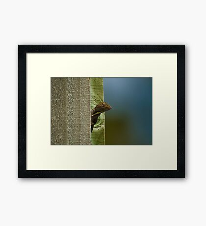 Curious Neighbor Framed Print