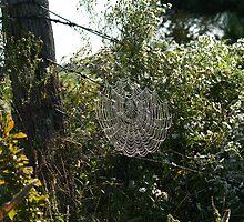 Web of Droplets by DigitallyStill