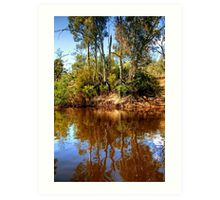 The Murray River & Young River Red Gums  Art Print