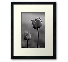 Paired Tulip's #1 Framed Print