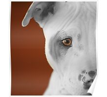 freckles the pit 3 Poster