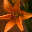 The smile of a Lily by Roxane Bay