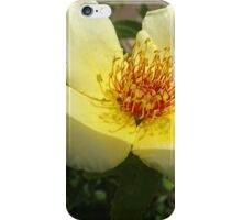 Flower Close-Up, Canyon Road, Santa Fe, New Mexico iPhone Case/Skin