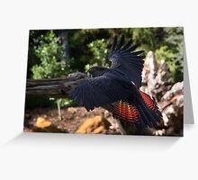 Australian Black Cockatoo - Red tail Greeting Card
