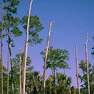 Flatwoods by MMerritt