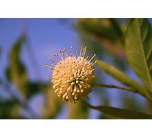 Florida Flower Photographic Print