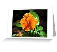 Orange Pansy in Mirrored Frame Greeting Card