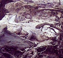 Camouflaged Croc by medley