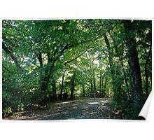 The Elm Grove - Oakbank Poster