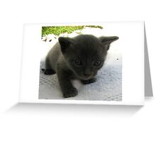 I love Cats! Greeting Card