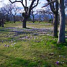 Field of Crocus by George Cousins