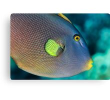 PinkTailed Trigger Fish Canvas Print