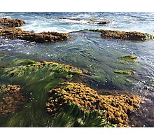 Ocean Weeds Photographic Print