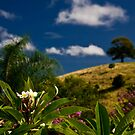The Tree on the Hill by morealtitude