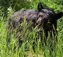 Black bear awaking for the season by Luann wilslef