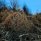 grassland by evon ski