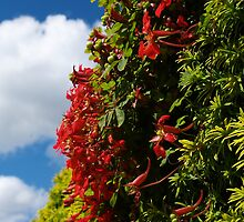Hedge by baldy