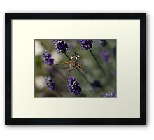 Humming Bird Moth 2 Framed Print