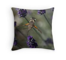 Humming Bird Moth 2 Throw Pillow
