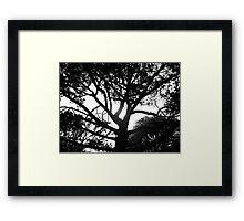 BROODING BOTANICS - LAUNCESTON Tasmania Framed Print